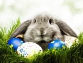 Nem csak a nyuszi fog fázni húsvétkor