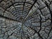 Az évgyűrűk tükrözik a civilizációk fénykorát és hanyatlását